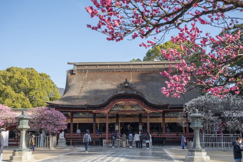 This is a picture of the historic main shrine of Dazaifu Tenmangu Shrine, with the pink plum blossoms associated with the shrine. Some worshippers can be seen in the precincts of the shrine. This image is linked to the Dazaifu Trip page in Fukuoka Walks website.
